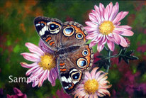 Uncommon Beauty - Common Buckeye