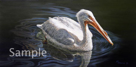 Illuminated - White Pelican